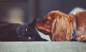 Manakah yang Lebih Pintar, Anjing atau Kucing?