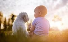 Bayi dan Hewan Peliharaan, Amankah?