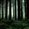 Efek CO2, Pohon Cepat Tumbuh dan Mati Muda