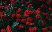 Kisah Suram di Balik Karangan Bunga