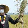 Petani Membutuhkan Kehadiran Pemerintah dan Kebesaran Hati Pengusaha