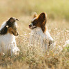Alasan Anjingmu Perlu Disteril Sejak Usia Dini
