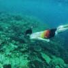 Kerusakan Terumbu Karang Kepulauan Seribu Capai 60 Persen