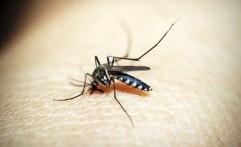 Waspada, Nyamuk di Sekitar Rumah Bisa Amat Berbahaya