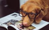 Ketika Anjing Bisa Mendeteksi Penyakit