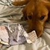 Mengharukan, Seekor Anjing Selamatkan Pemiliknya dari Virus Corona