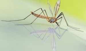 Usir Nyamuk dengan 7 Bahan Alami Ini