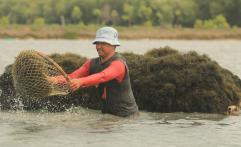 Produksi Rumput Laut Tembus Satu Juta Ton