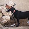 Intuisi Alami, Anjing Mampu Ketahui Niatan Seseorang