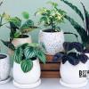 Belanja Tanaman Hias Mudah dan Berkualitas di Botani Bar