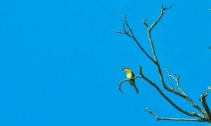 Ditemukan Spesies Baru Burung Berkicau di Indonesia