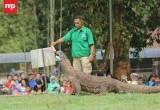 Liburan Akhir Tahun di Kebun Binatang Ragunan