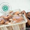 Kemenag Target 15 Ribu UMKM Dapat Sertifikasi Gratis Produk Halal