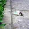 Bahan-bahan Alami yang Ampuh Buat Usir Tikus dari Rumah