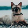Baru Pelihara Kucing? Ini Kebutuhan Dasar yang Harus Diperhatikan