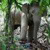 Gajah Mengamuk Tewaskan 15 Orang