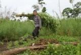 Ladang Ganja Aceh