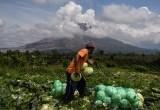 Potensi Pertanian di Indonesia