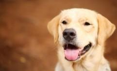 Anjing Ternyata Berasal dari Asia Tengah