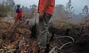Perusahaan Akan Diwajibkan Padamkan Kebakaran Hutan di Wilayahnya