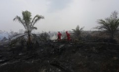 Kebakaran Lahan Meluas, GAPKI: Ada Black Campaign