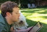 Beast, Anjing Mark Zuckerberg yang 'Ajaib'