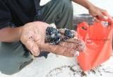 Minyak Aspal Mencemari Kepulauan Seribu
