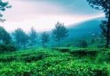 5 Wisata Favorit di Kawasan Puncak