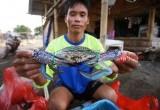 Nelayan Rajungan Tanjung Kait
