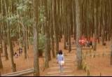 Selfie Kekinian di Hutan Pinus Dlingo, Yogyakarta