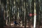 5 Wisata Hutan Pinus Instagramable