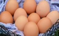 Banyak Makan Telur Ternyata Tidak Baik untuk Kesehatan