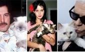 Dipelihara Selebritas Dunia, Kucing-kucing ini Dimanjakan dengan Kemewahan