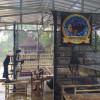 Hanyadari Hobi Jadi Pebisnis Ikan Cupang