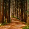 Hutan Terindah dari Seluruh Dunia, Mana yang Paling Ajaib?