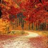 Mau Wisata Musim Gugur? 5 Tempat ini Paling Tepat