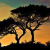 Pohon Cinta dan Kisah Romantis di Baliknya