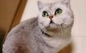 Kisah Viral Kucing Terjebak 40 Hari di Apartemen, Karena Pemiliknya Terkena COVID-19