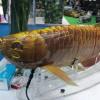 Tiongkok Pamerkan Drone Bawah Air Seperti Ikan Sungguhan