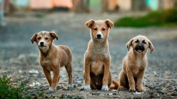 Mau Adopsi Anjing? Perhatikan Hal-hal ini