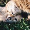 Stop Beri Makanan Sisa pada Anjing dan Kucing Peliharaan