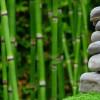 Menurut Feng Shui, Beberapa Tanaman Mungkin Membawa Sial