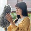 MeowEver, Solusi Buat Kamu yang Tidak Bisa Pelihara Kucing