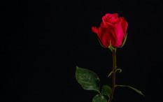 Katakan dengan Bunga untuk Berbagai Kesempatan