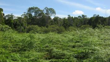 Pemerintah Harus Tertibkan Izin Hutan Tanaman Industri