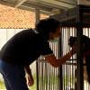 Ismawanty, Jagoan Bagi Anjing Terlantar