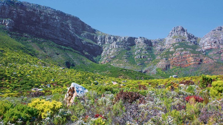 the fynbos
