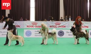 PERKIN Jaya Championship Dog Show, Kontes Anjing Ras di Ancol