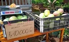 Mangga Agrimania, Buah Unggulan Indramayu