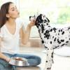 Penelitian Menunjukkan Anjing Tahu Kita Jujur atau Berbohong